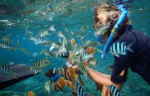 Nusa Penida Snorkeling Tour Services