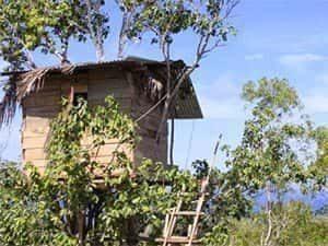 rumah pohon nusa penida bali accommodation